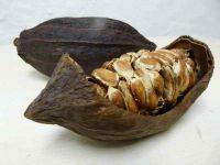 Kakaofrucht ohne Bohnen, getrocknet, als Hälfte.