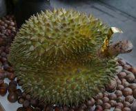 Durian Monthong, gefroren, Stück- pro kg