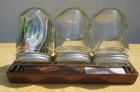 Keimgläser, 3 Gläser- mit Stativ und Schale