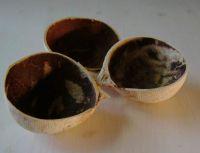 Kokosschalen, Stück