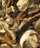 getrocknete Steinpilze, 25g, nicht erhitzt, eigene Wildsammlung