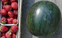 Wassermelone, getr. ohne Zusätze, 100g